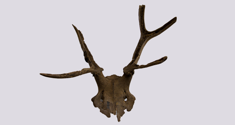 Early Mesolithic antler frontlet 'head-dress.' Star Carr. N. Milner/Vale of Pickering Trust.